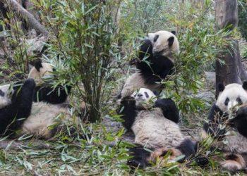 Cortesía de Xinhua