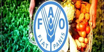 Gobierno Bolivariano ratifica compromiso de fortalecer alianzas estratégicas y de trabajo con la FAO