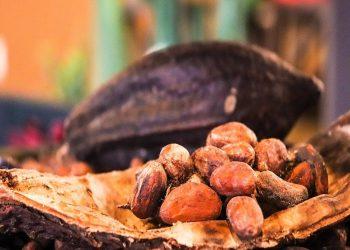 Premian el cacao venezolano en concurso Great Taste Awards 2020 de Inglaterra
