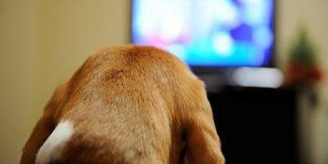 cómo tus mascotas perciben la televisión