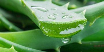 5 beneficios del aloe vera proveniente de la sábila